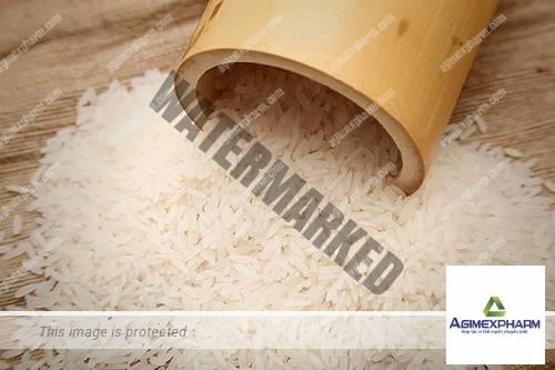 Việt Nam đầu tư một số giống lúa thành gạo dược phẩm